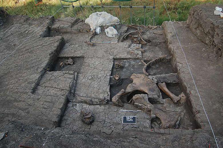 Ansicht der Ausgrabungsfläche mit einem Teil der freigelegten Elefantenknochen