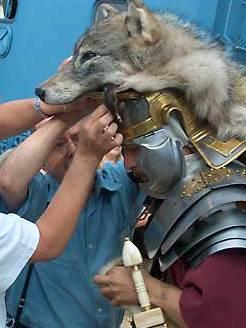 Das Wolfsfell des Standartenträgers. (Foto: Hans-Christian Dirscherl)