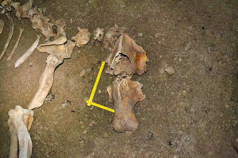 Fossile Knochen vom Höhlenbär