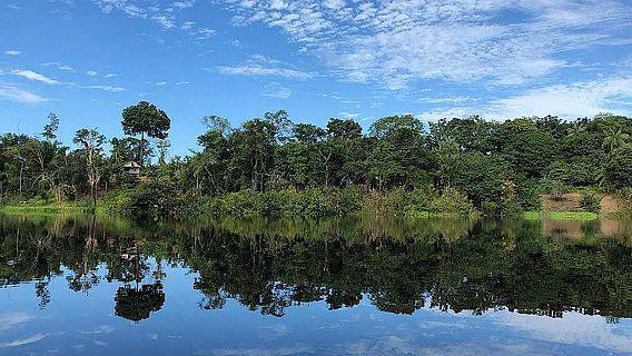 Paranussbaum in der Nähe eines Hauses am Flussufer