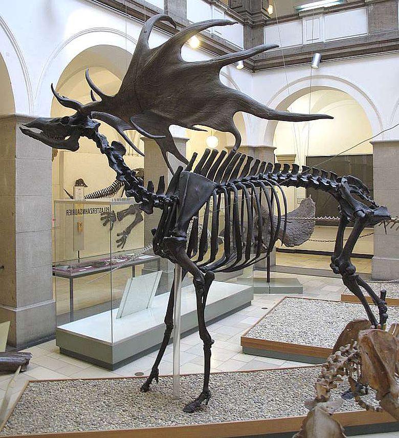 Riesenhirsch (Megaloceros giganteus)