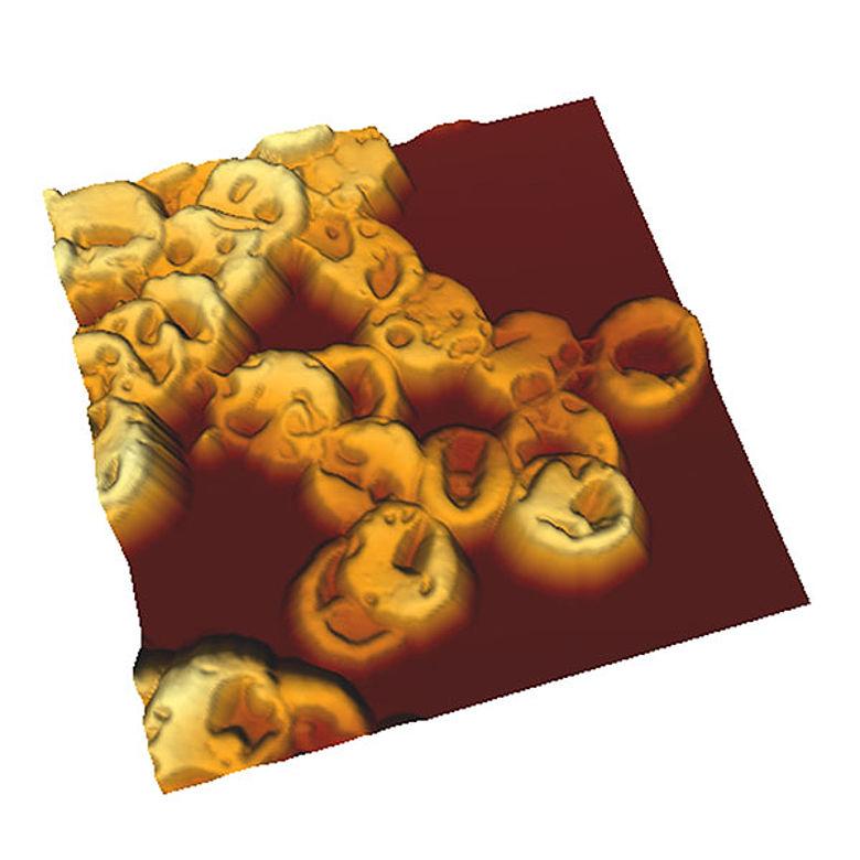 Ötzis rote Blutkörperchen in 3D