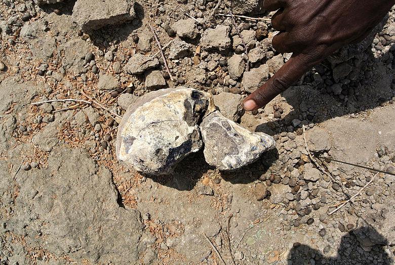 Australopithecus-Schädel in Fundlage