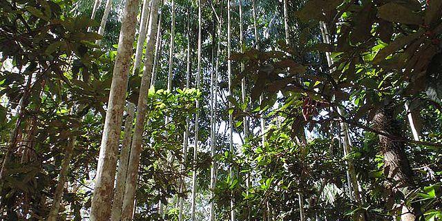 Kultivierter Urwald