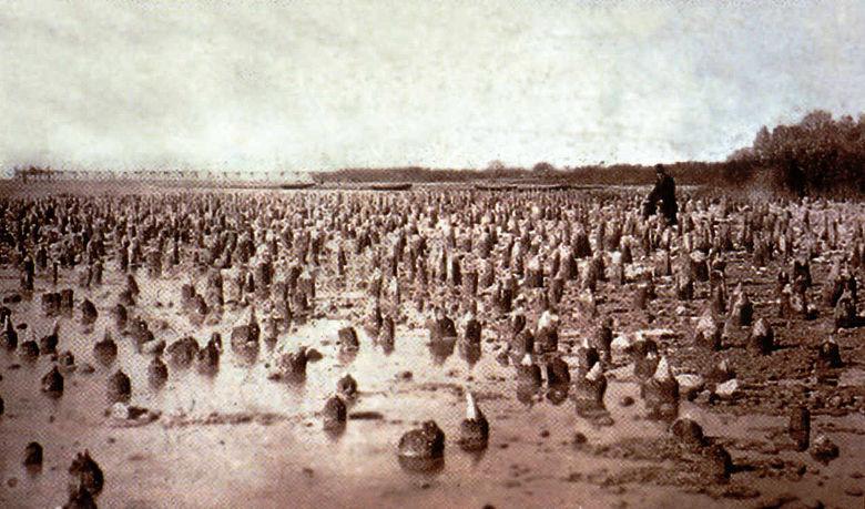 Das Pfahlfeld von Cortaillod am Neuenburgerssee um 1875