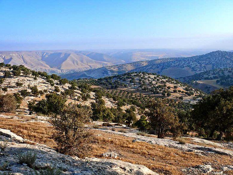 Surveygebiet unweit der Golanhöhen
