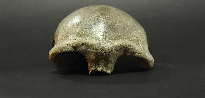 Schädeldecke aus dem Salkhit-Tal in der Mongolei