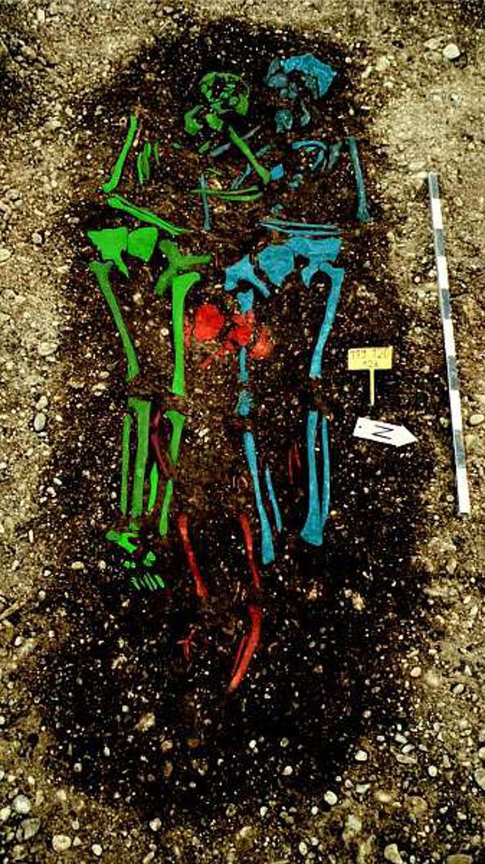 Untersuchte Skelette aus dem Gräberfeld Aschheim-Bajuwarenring (Foto: H.P. Volpert, BLfD)