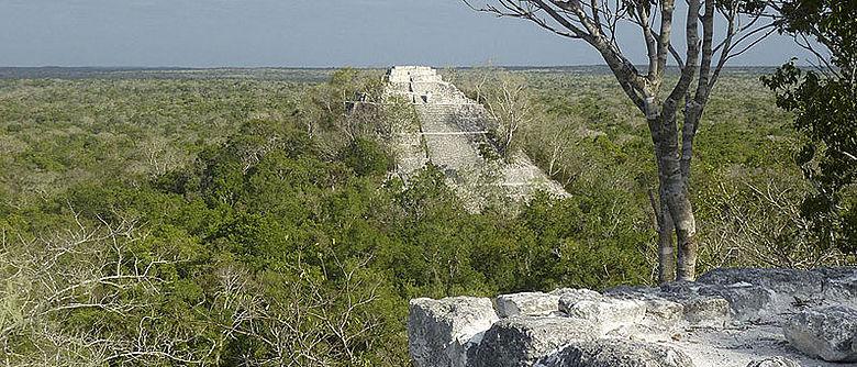 Die Pyramiden von Calakmul, eines der größten Zentren der Maya, erstrecken sich imposant über das Blätterdach des mexikanisch-guatemaltekischen Regenwalds Petén hinweg. Von hier aus wurde auch ein halbes Jahrhundert lang Uxul beherrscht, nur 30 Kilometer Luftlinie entfernt liegend (Foto: Ewald Graf)