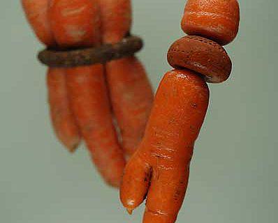 Vorne rechts: Die Karotte durchwuchs einen Spinnwirtel. Links hinten: Mehrere Rüben durchwuchsen einen Eisenring. (Foto: Kantonsarchäologie Zürich)