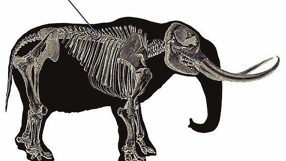 Von Speer getroffenes Mastodon