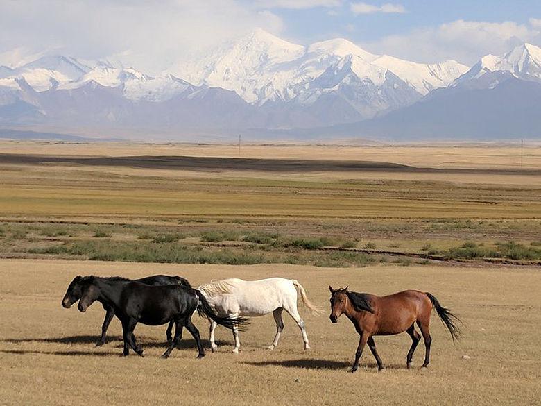 Pferde in Kirgisistan