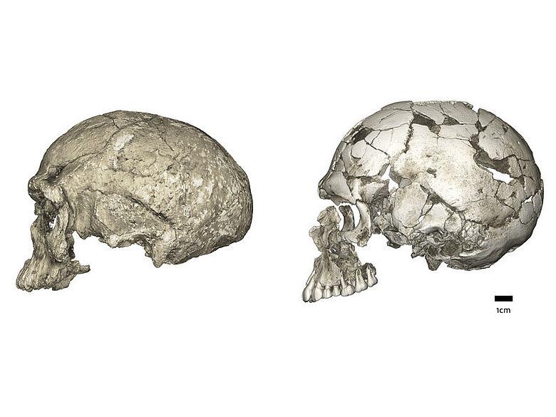 Homo sapiens Schädel aus Marokko und Israel