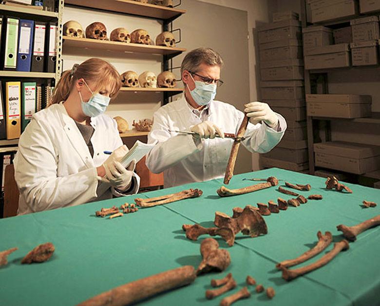Anthropologische Untersuchung des Skeletts