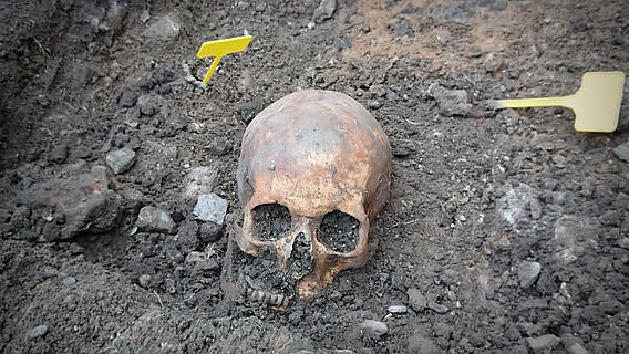 Domgrabung Paderborn: Mittelalterlicher Schädel