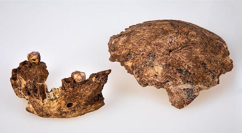 Neandertaler-Schädel und Unterkiefer aus Israel