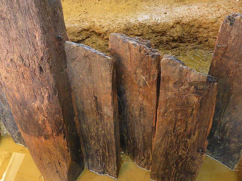 Ansicht mehrerer Eichenpfähle der Uferbefestigung des Karlsgrabens