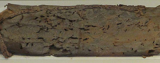 Lederbeutel der Babatha im Israel Museum in Jerusalem