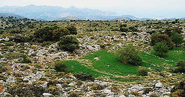 Abb. 11| Noch heute bestelltes Gerstefeld an einem minoischen Gehöft (Ruine an den Bäumen links Mitte, Umfriedungsmauer rechts davon), Bereich Kritsa Pateragiorgis. Im Hintergrund Agios Nikolaos © S. Beckmann