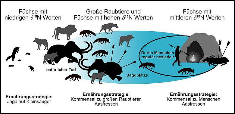 Ernährungsstrategien von Füchsen