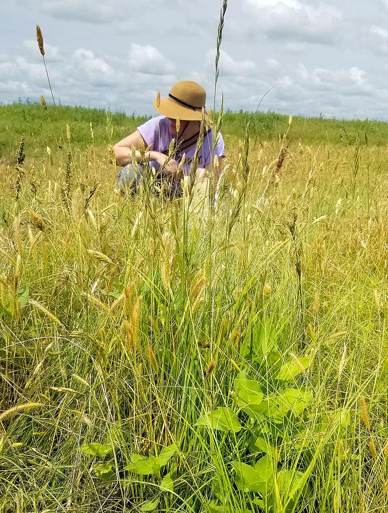 Botanische Untersuchung in Prärie