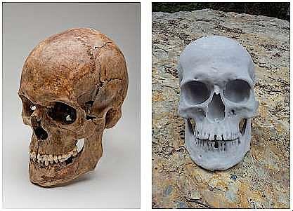 Der Originalschädel und dessen nach CT-Daten erstellter 3D-Ausdruck