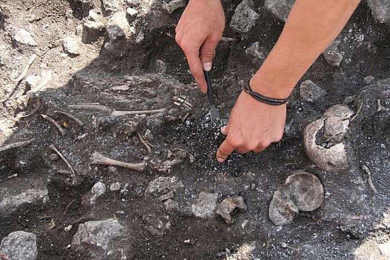 Freilegung eines Skelettes (Foto: Urgeschichtemuseum NÖ)