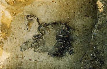 Frühmittelalterliche Pferdebestattung. Foto: Landesamt für Archäologie Sachsen