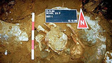 Oberesch: In einer tieferen Lage wird ein zweiter menschlicher Schädel entdeckt (Abb.: Varusschlacht im Osnabrücker Land, Museum und Park Kalkriese, Abt. Archäologie)