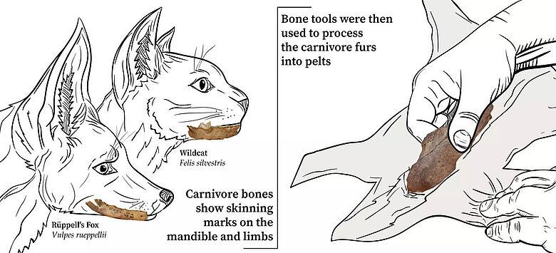 Fleischfresser-Knochen als Werkzeug