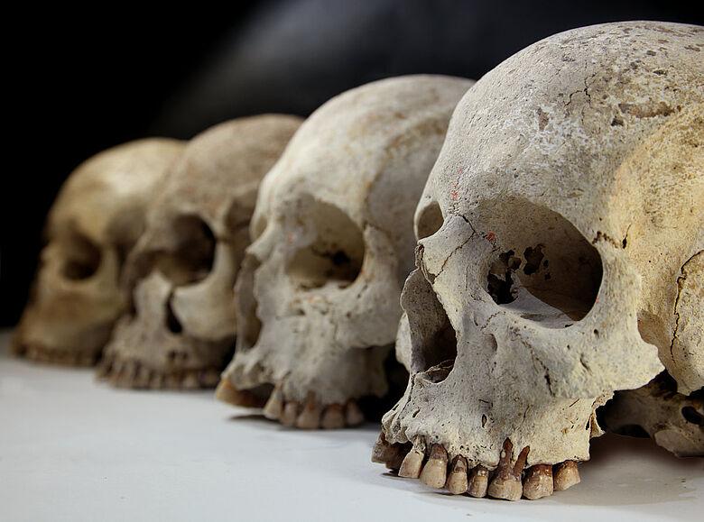 Etrusker-Schädel von Casenovole