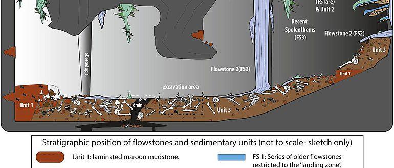 Illustration der Fundsituation und Fundschichten in der Dinaledi Kammer