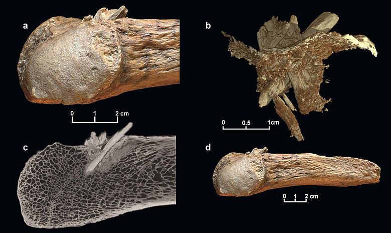 Mastodonknochen mit Speerspitze