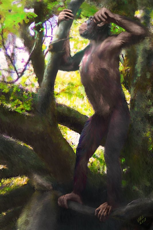 So könnte ein männlicher Danuvius guggenmosi ausgesehen haben