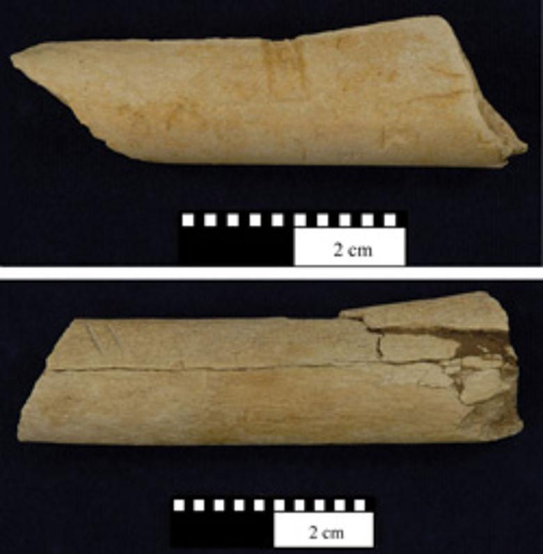 Knochen mit Schnitt- und Schlagspuren