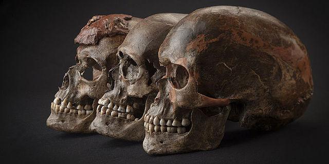 Schädel aus DolniVěstonice