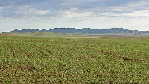 Ackerfläche in der nördlichen Mongolei