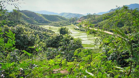Kulturwälder in Guangdong, China