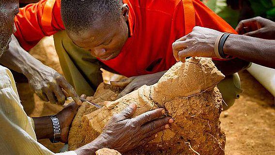 """Ausgrabungen an der Fundstelle """"Ifana"""" im Frühjahr 2011 in Nigeria: Sorgfältig legen die afrikanischen Helfer das Oberteil einer menschlichen Terrakotta frei (© Prof. Peter Breunig, Goethe-Universität Frankfurt)"""
