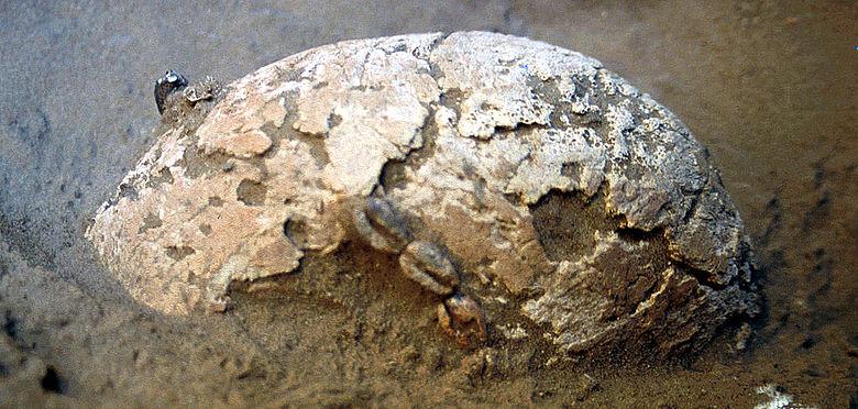 Einige Bestattungen erhielten - auf der Stirn aufgereiht - Gehäuse von Kaurischnecken (Foto: S. Magnavita)