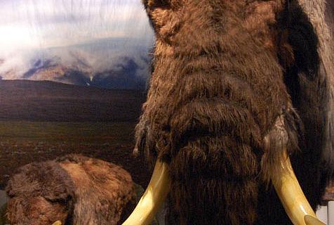 Mammut-Rekonstruktionen. © Neanderthal Museum