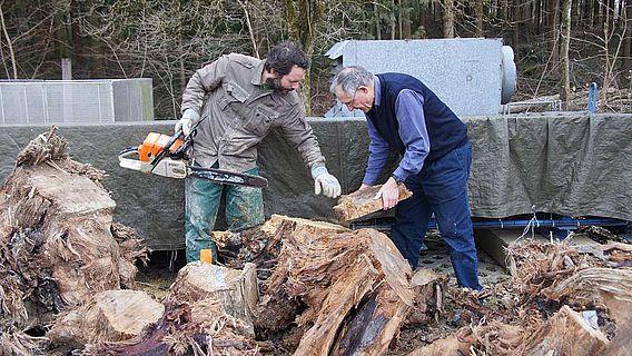 Daniel Nievergelt und Fritz Schweingruber wählen Proben aus dem Holz aus, das an die WSL transportiert wurde. (Foto: WSL / Gottardo Pestalozzi)