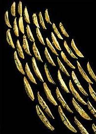 Goldschiffchen von Nors. (Foto: Juraj Lipták, LDA Halle)