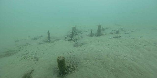 Pfähle der spätbronzezeitlichen Seeufersiedlung im Thunersee