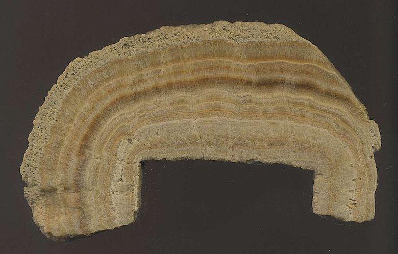 Querschnitt einer Karbonatablagerung der Wassermühlen von Barbegal