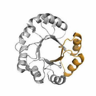 Proteinbausteine