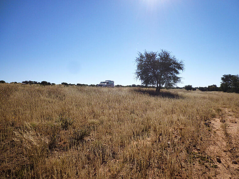 Ausgetrocknetes Flussbett in der südlichen Kalahari