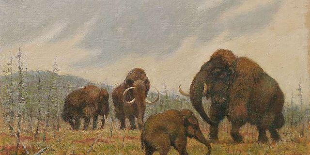 Mammutgruppe mit Jungtier