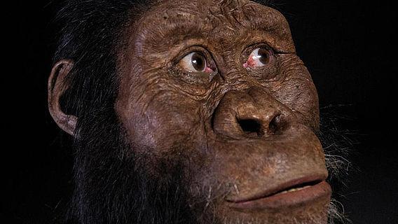 Gesichtsrekonstruktion Australopithecus anamensis