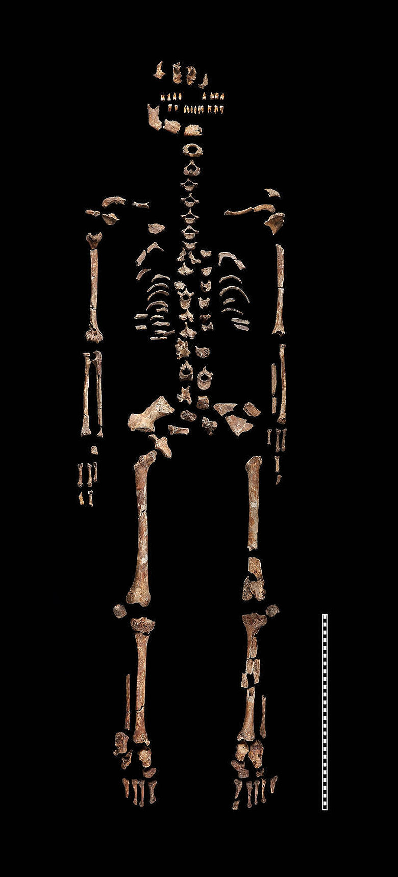 Skelett der Heiligen